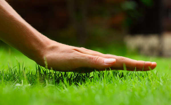 Sod Lawn Albuquerque - R and S Landscaping Albuquerque NM 505-271-8419