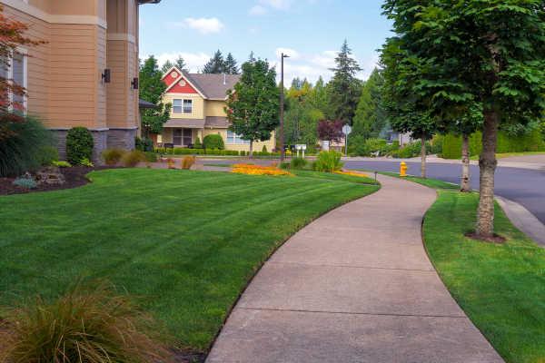 Albuquerque Lawn Care cc- R and S Landscaping Albuquerque NM 505-271-8419