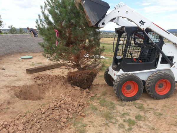 Bobcat Grading, Excavating and Debris Removal Services - R & S Landscaping 505-271-8419