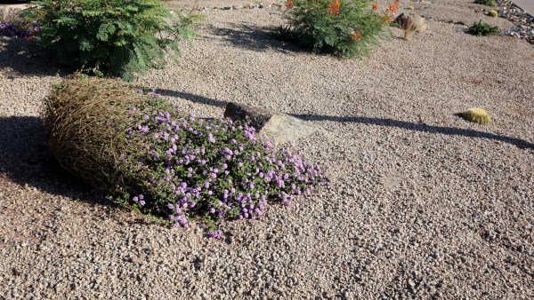 albuquerque xeriscape landscaping - R and S Landscaping Albuuerque NM 505-271-8419