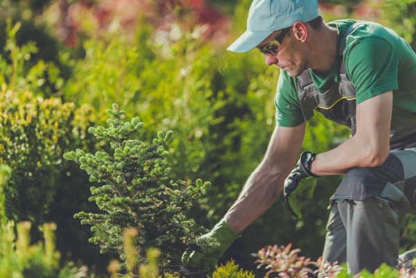 Albuquerque landscaping - Landscaping with Trees - R and S Landscaping 505-271-8419