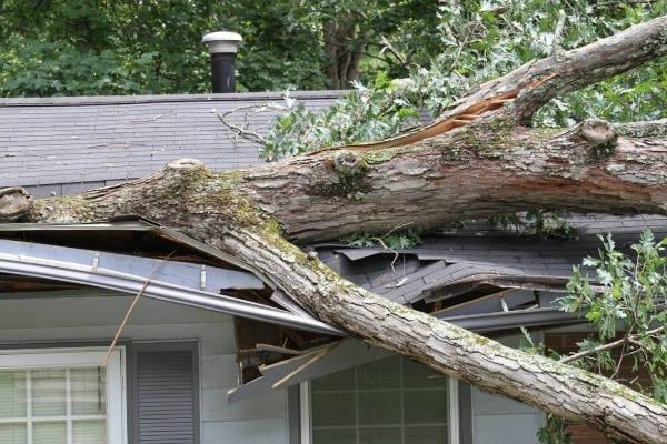 Storm Damage Tree Services Albuquerque NM