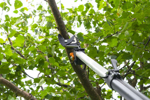 Tree Pruning Albuquerque NM - R & S Landscaping 505-271-8419
