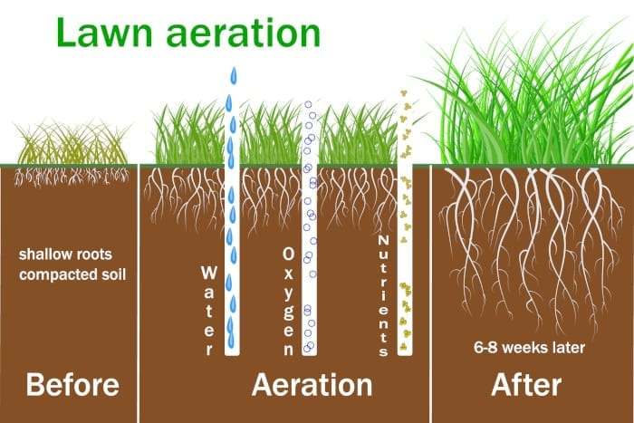 Albuquerque Lawn Aeration Tips - R & S Landscaping 505-271-8419 b