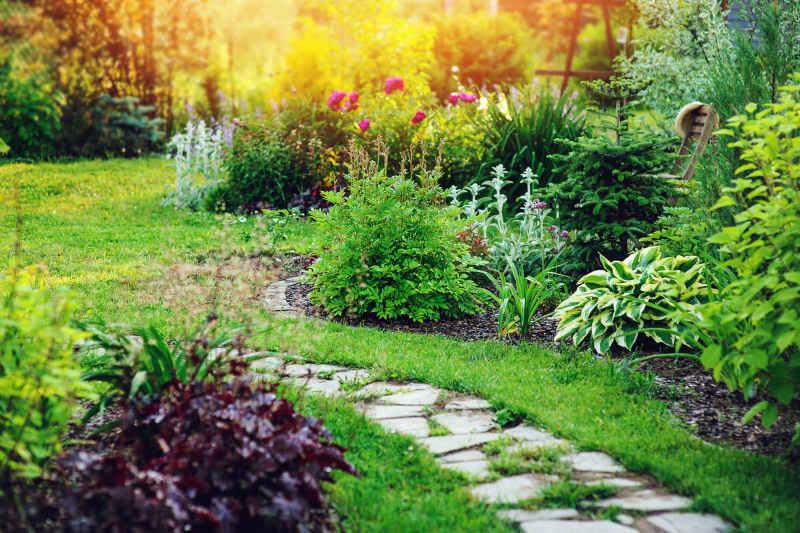 Perennials for Albuquerque Gardens - R & S Landscaping 505-271-8419