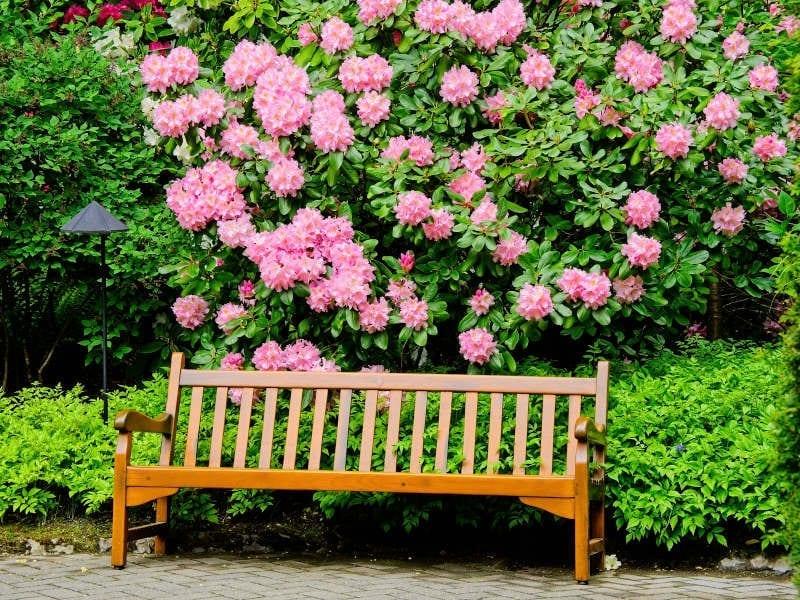 Albuquerque Springtime Garden Preparation 2020 - R & S Landscaping 505-271-8419 a