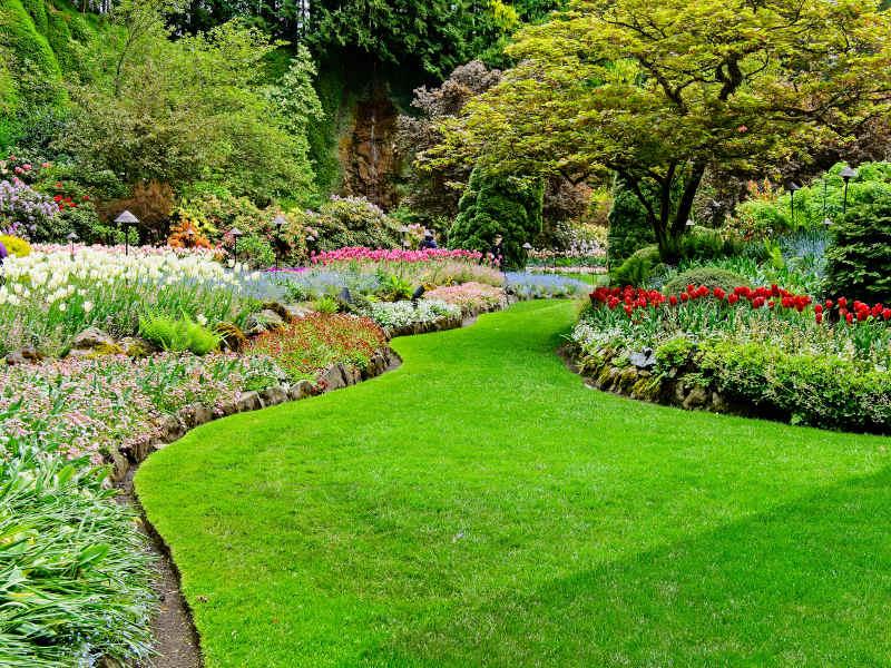 Albuquerque Springtime Garden Preparation 2020