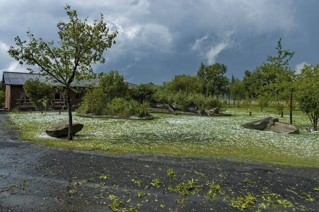 Plan and Be Ready - Protecting Your Plants From the Damage Caused by Hailstorms - Part One by R & S Landscaping 505-271-8419