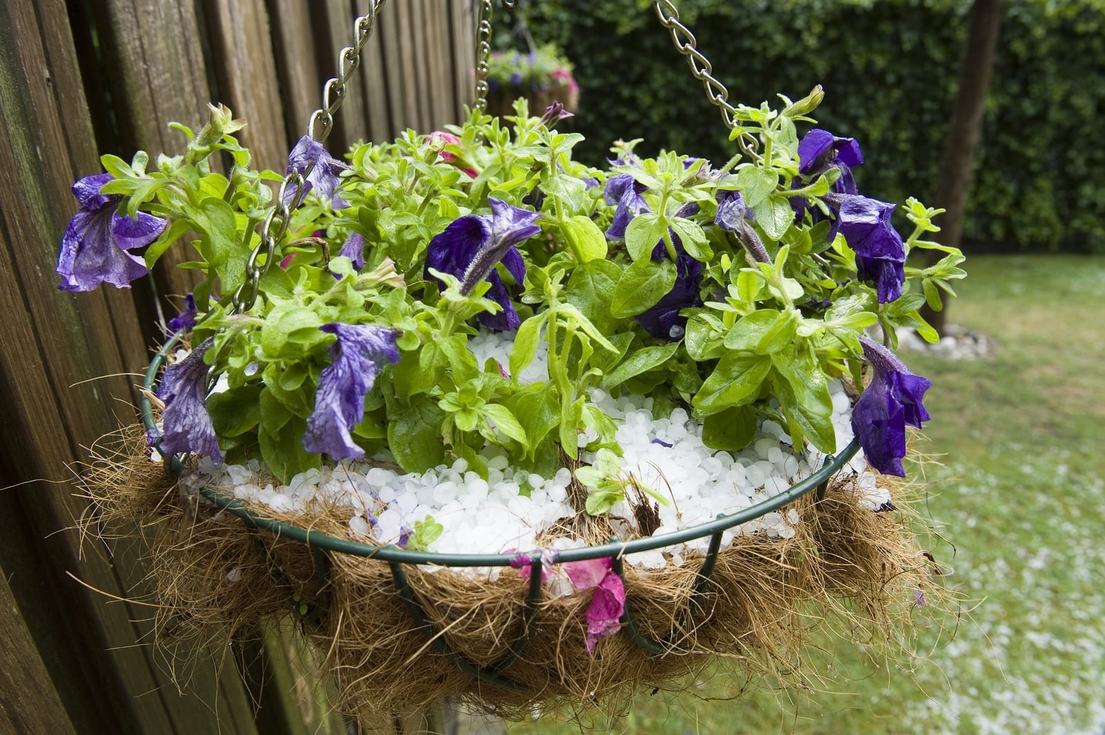 Plan and Be Ready - Protecting Your Plants From the Damage Caused by Hailstorms - Part Two