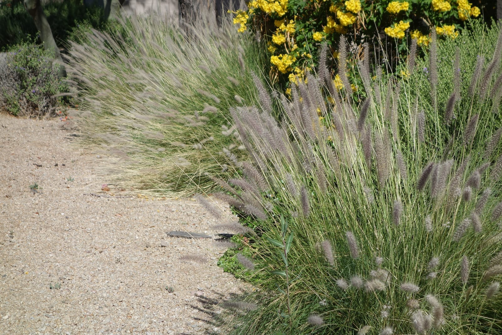 Albuquerque Xeriscaping - Save Money and Add Value to Your Albuquerque Home by R & S Landscaping - Part One b