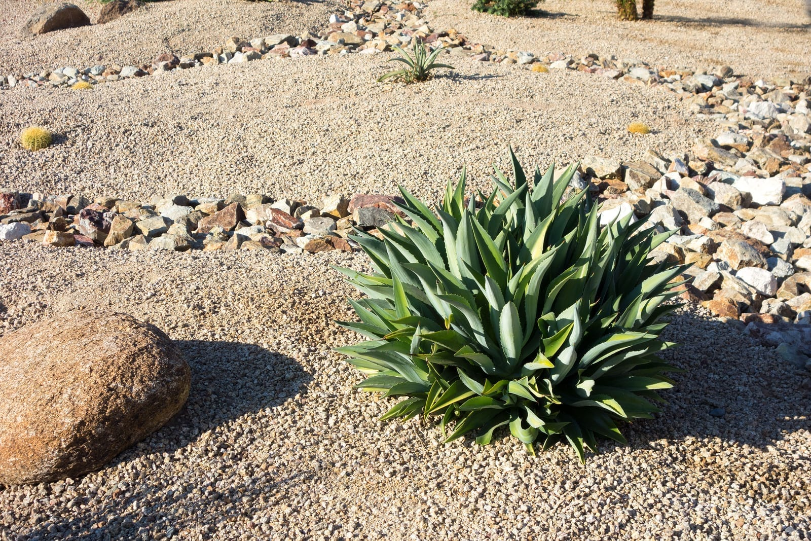 Why You Should Hire R & S Landscaping to do Your Albuquerque Xeriscape Landcaping b