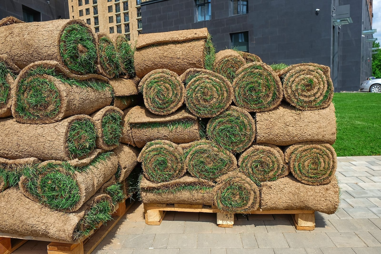 Albuquerque Sod Lawn—How to Install it So it is Successful by R & S Landscaping 505-271-8419