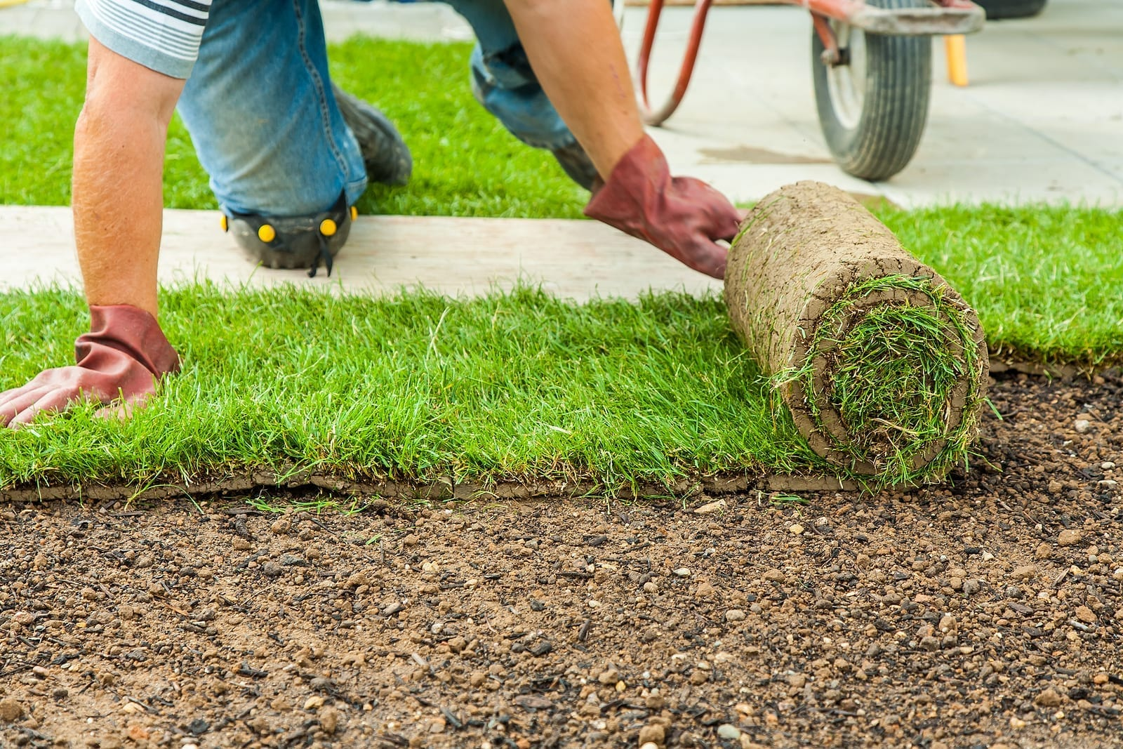 Albuquerque Sod Lawn—How to Install it So it is Successful by R & S Landscaping 505-271-8419 d