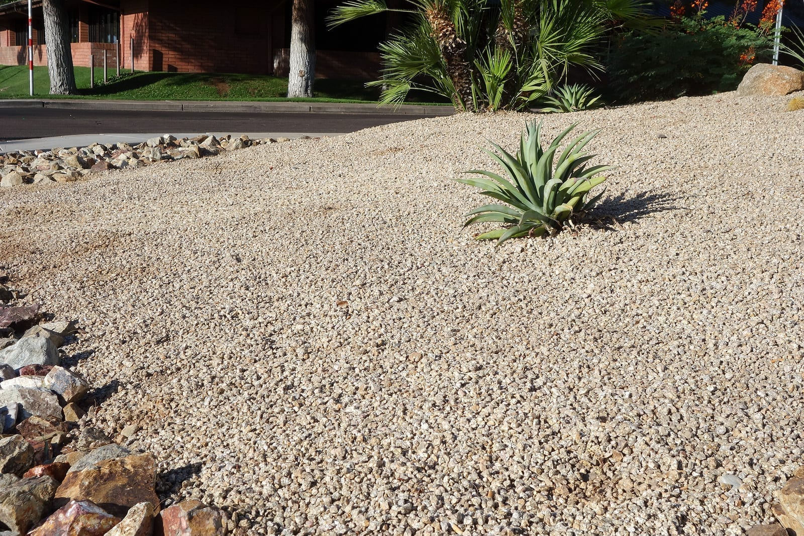 Albuquerque Xeriscaping Basics – The Ultimate Landscaping Game Plan that Saves Water – Part Two