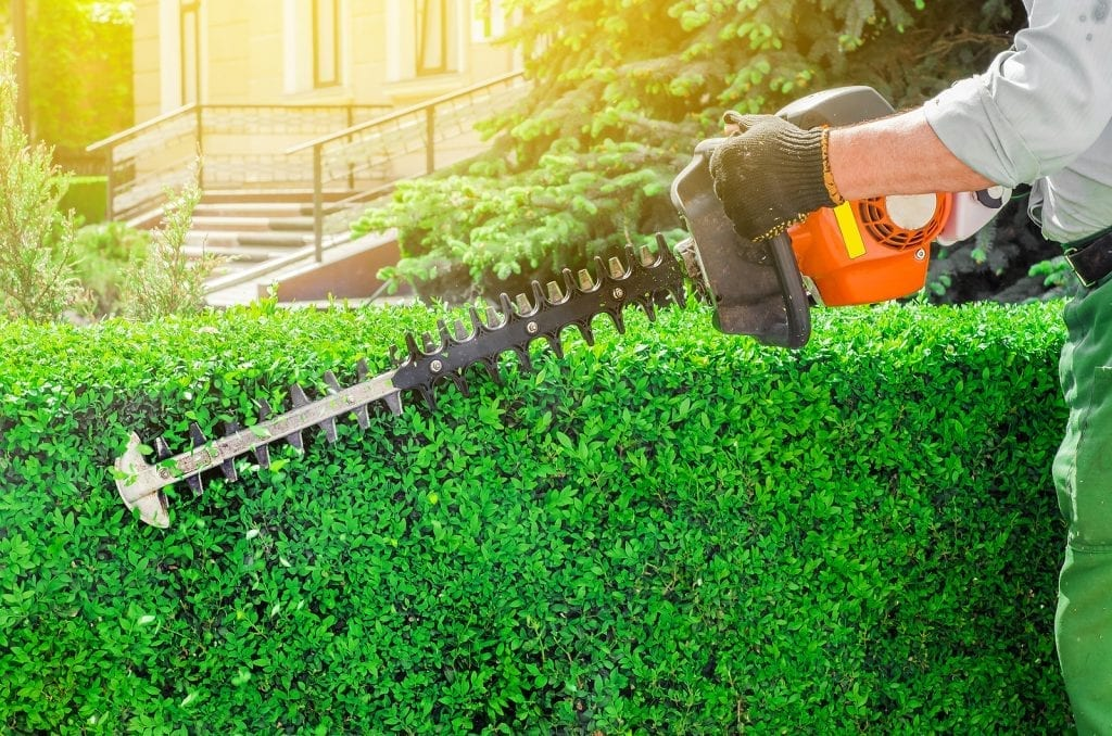 Hedge Trimming Bush Trimming and Shrub Trimming Albuquerque NM R & S Landscaping 505-271-8419 a