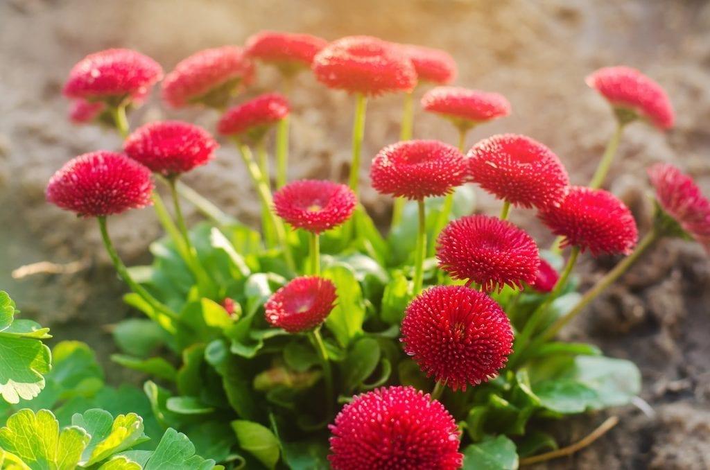 Albuquerque Fall Perennial Planting Tips