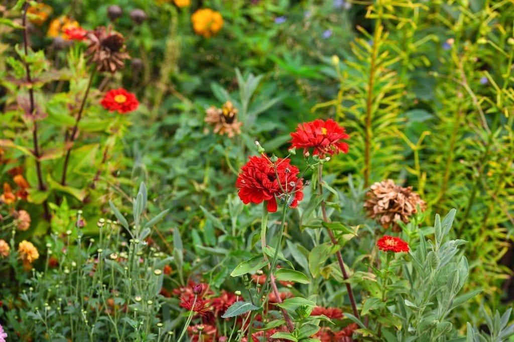 Winterize Your Albuquerque Garden for Springtime 2021 Success Weeding by R & S Landscaping Inc 505-271-8419 b