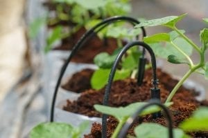 Albuquerque Drip Irrigation Tips by R & S Landscaping