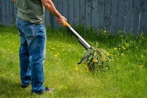 Albuquerque Weed Control Strategies to Win the Weed Wars - Part Two by R & S Landscaping 505-271-8419