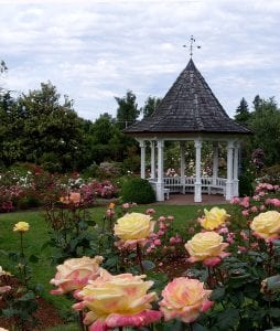 Albuquerque Landscaping with Roses A Guide for Gardeners by R & S Landscaping 505-271-8419