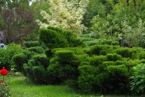 Albuquerque Landscaping with Bushes by R & S Landscaping rslandscapinginc.com 505-271-8419 a