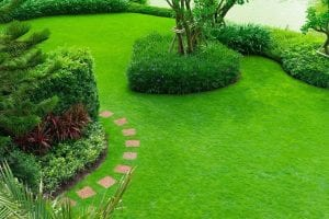 Albuquerque Lawn Maintenance – 10 Steps to a Stunning Green Lawn by R & S Landscaping 505-271-8419