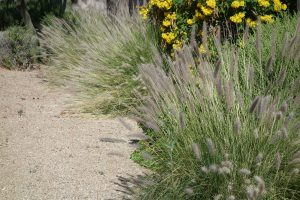 The Neophyte's Steps to Xeriscape in Albuquerque by R & S Landscaping 505-271-8419